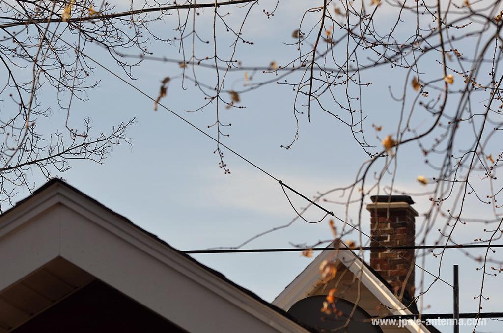 Wire-Antenna-tree-check